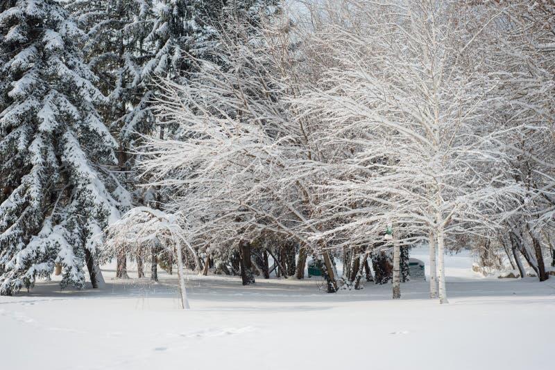 Horizontal de l'hiver Parc neigeux majestueux europa photo stock