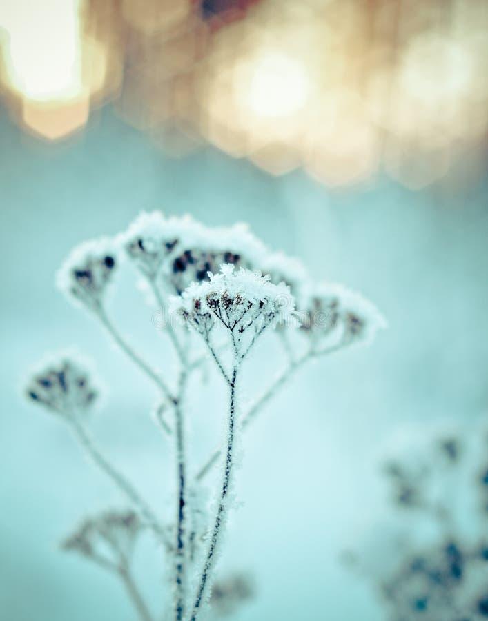 Horizontal de l'hiver Scène de l'hiver photo stock
