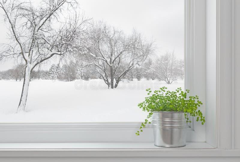 Horizontal de l'hiver vu par l'hublot, et plante verte image libre de droits