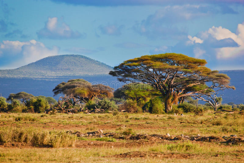 Horizontal de la savane en Afrique, Amboseli, Kenya images stock