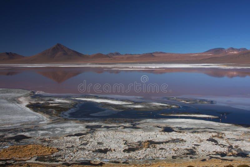 Horizontal de Laguna Colorada photo libre de droits