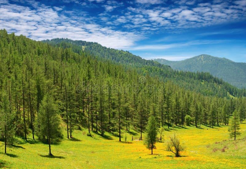 Horizontal de montagne photographie stock libre de droits
