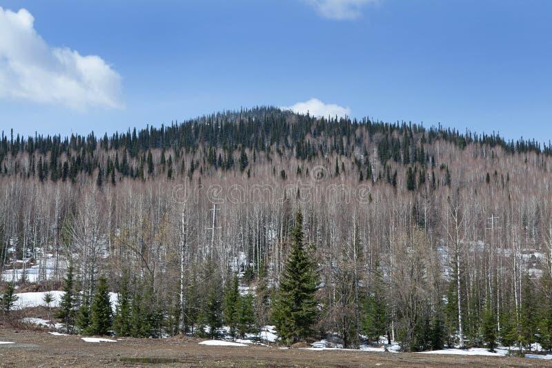 Download Horizontal de montagne image stock. Image du pré, montagne - 56488647
