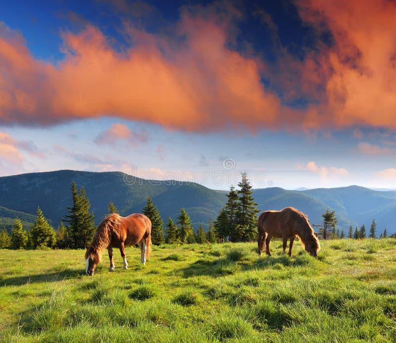 Horizontal de montagne avec des chevaux image stock