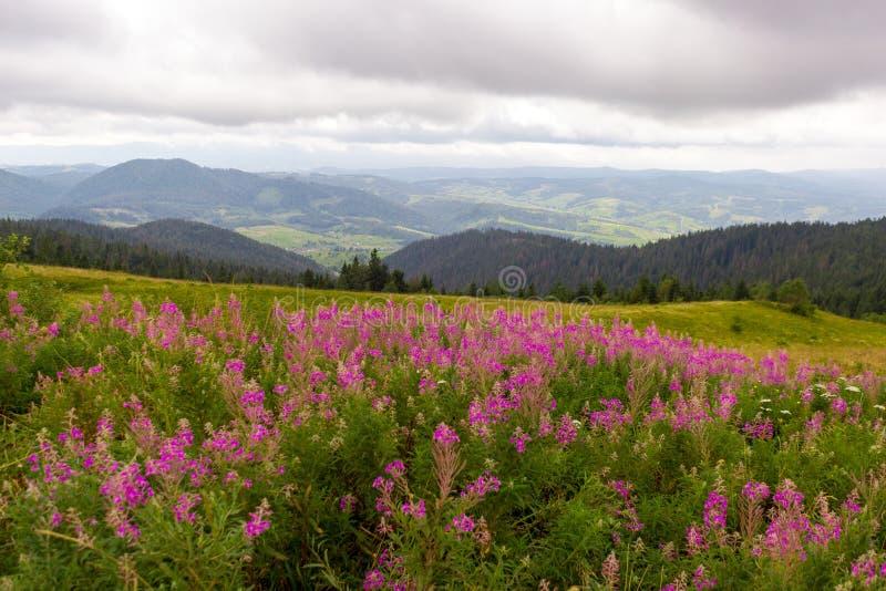 Horizontal de montagne avec les fleurs roses photos stock