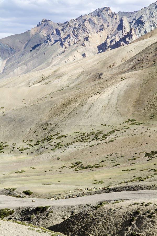 Horizontal de montagne de Ladakh, Inde image stock