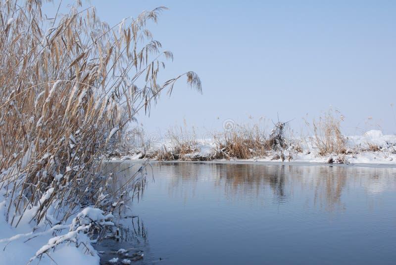 Horizontal de nature de l'hiver images libres de droits
