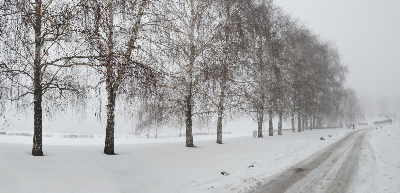Horizontal de nature des hivers photos stock