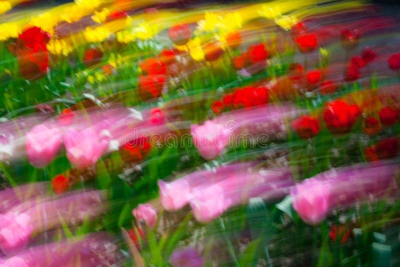 horizontal de peinture-Jardin de pétrole avec des tulipes photographie stock libre de droits