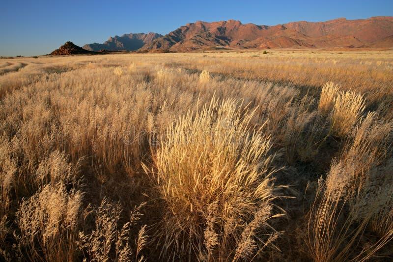 Horizontal de prairie, Namibie images libres de droits
