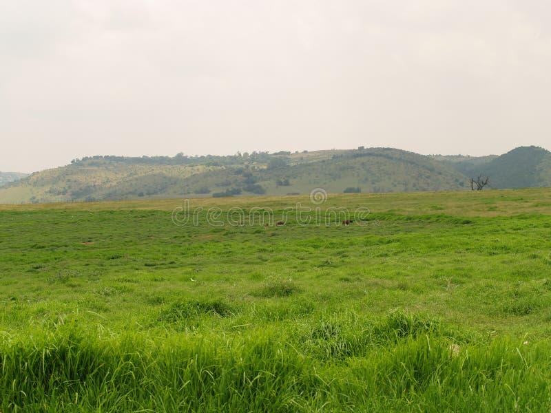 Horizontal de réserve naturelle de Krugersdorp photos libres de droits