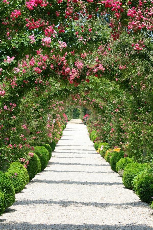 Horizontal de roseraie image stock