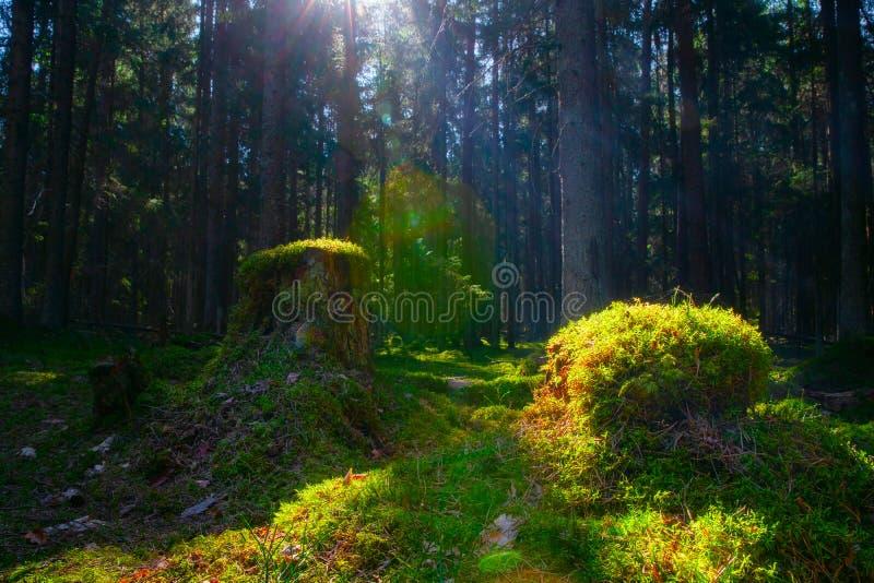 Horizontal de source photos stock