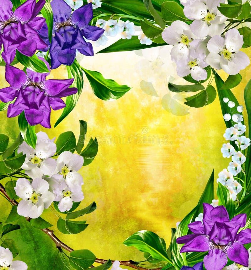 Horizontal de source Poire fleurissante illustration stock