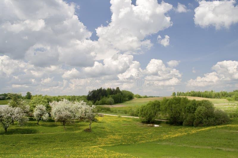 Horizontal de sources avec les pomme-arbres de floraison images stock