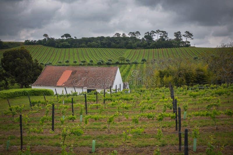 Horizontal de vigne photos stock