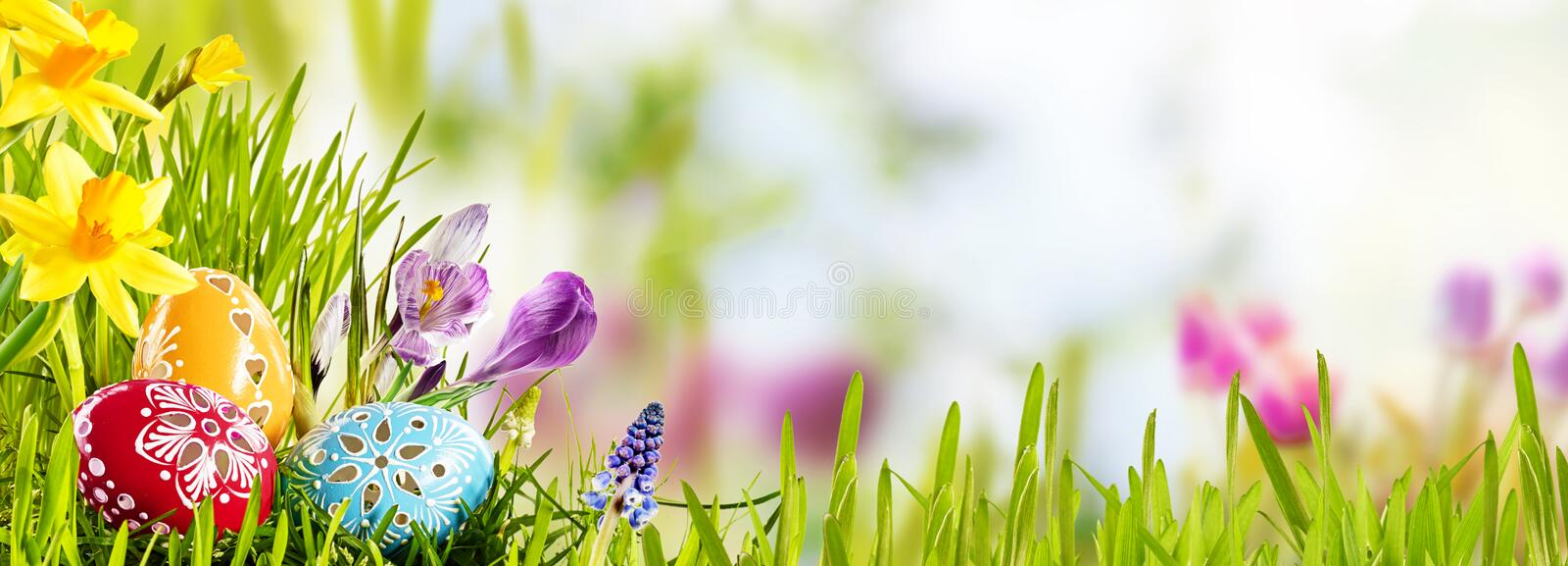 Horizontal Easter banner with eggs in a meadow. Horizontal Easter banner with eggs in a fresh green spring meadow nestling in the grass with colorful yellow royalty free stock photography