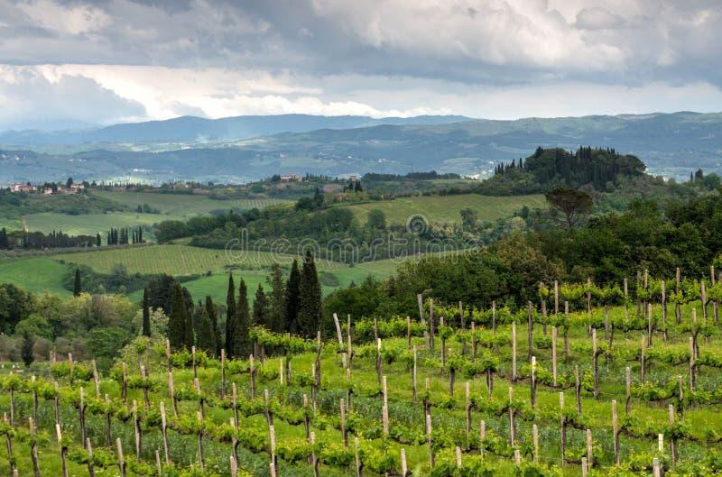 Horizontal en Toscane, Italie Belle campagne de wineyard images stock