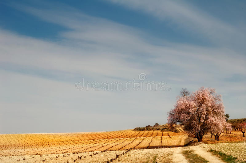 Horizontal espagnol photo stock