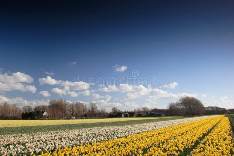 Horizontal fleuri images libres de droits
