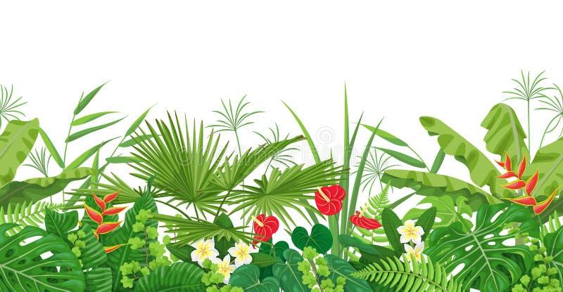 Tropical Plants Seamless Border stock illustration