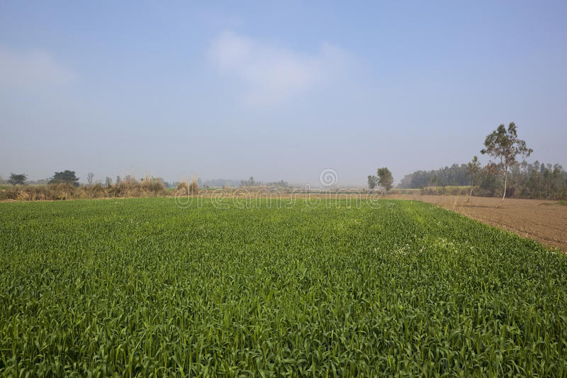 Horizontal flou de punjabi photos stock