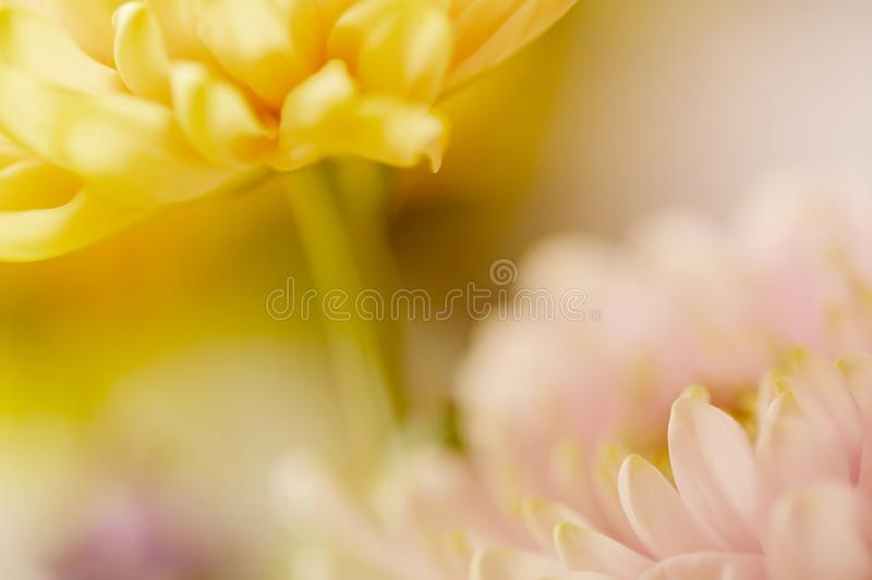 Soft pink and yellow pastel blurred flowers. A horizontal flower image in pink and yellow colors stock photos