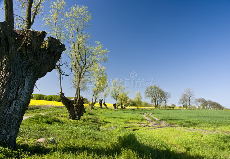 Horizontal garni d'arbres photographie stock libre de droits