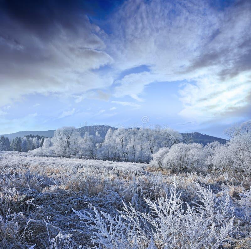 Horizontal gelé photo stock
