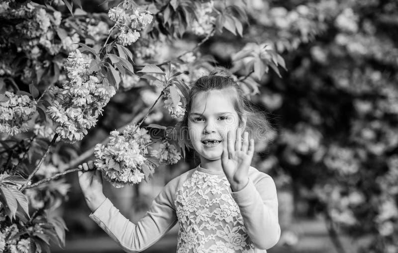 Horizontal gestaltetes Foto Sommer Kindheitssch?nheit gl?ckliches M?dchen in der Kirschblume Kirschbl?te-Baumbl?hen Bl?tengeruch, stockfotos
