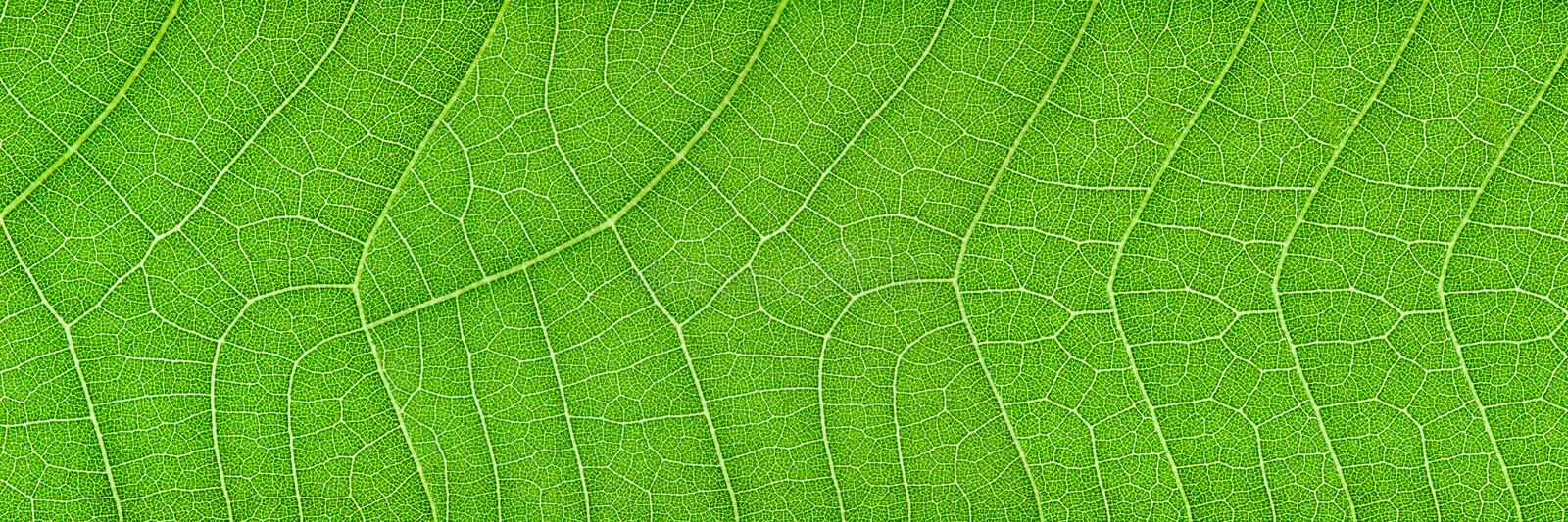 horizontal green leaf texture for pattern and background royalty free stock images