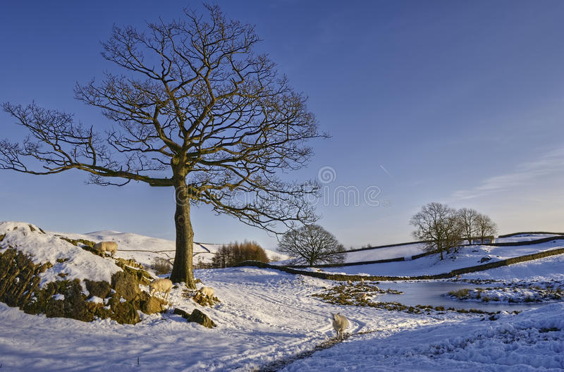 Horizontal hivernal photos stock
