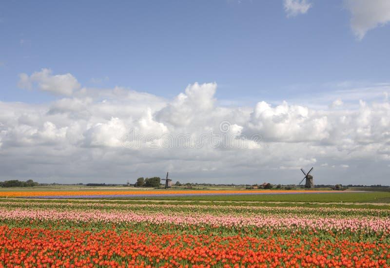 Horizontal hollandais photo libre de droits