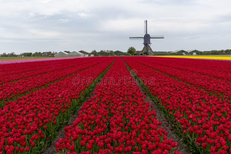Horizontal hollandais de moulin ? vent de tulipe photos libres de droits