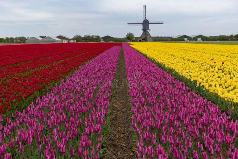 Horizontal hollandais de moulin ? vent de tulipe images libres de droits