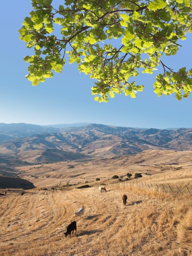 Horizontal idyllique avec la fronde de chêne photographie stock libre de droits