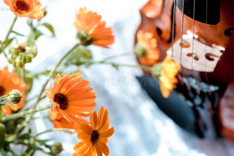 Horizontal image of the bottom half of violin with sheet music and flowers the front of the fiddle on windows stock images