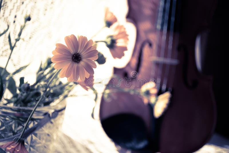Horizontal image of the bottom half of violin with sheet music and flowers the front of the fiddle on windows. Horizontal image of the violin, stand on the royalty free stock photo