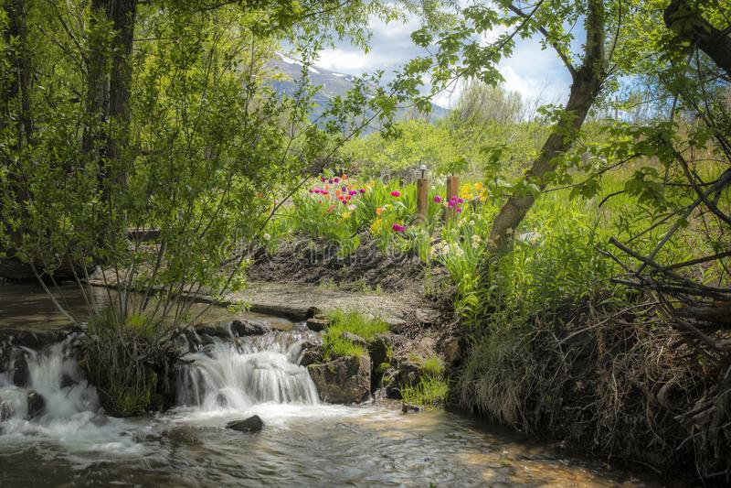 Tulip Garden and Stream landscape stock photo