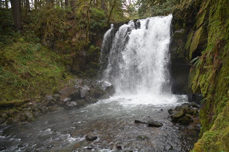 Horizontal Majestic Falls in McDowell Creek Park, Oregon. Majestic Falls is the largest of several modest waterfalls along McDowell Creek within McDowell Creek royalty free stock photos