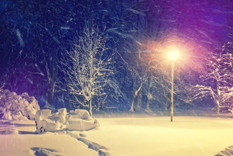 Horizontal merveilleux de l'hiver Le paysage d'hiver, neige a couvert les arbres givrés givrés en parc de ville de nuit image stock