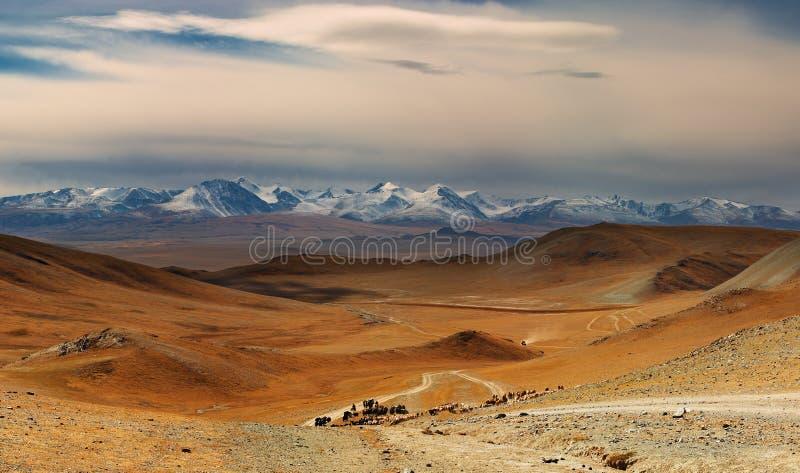 Horizontal mongol photographie stock libre de droits