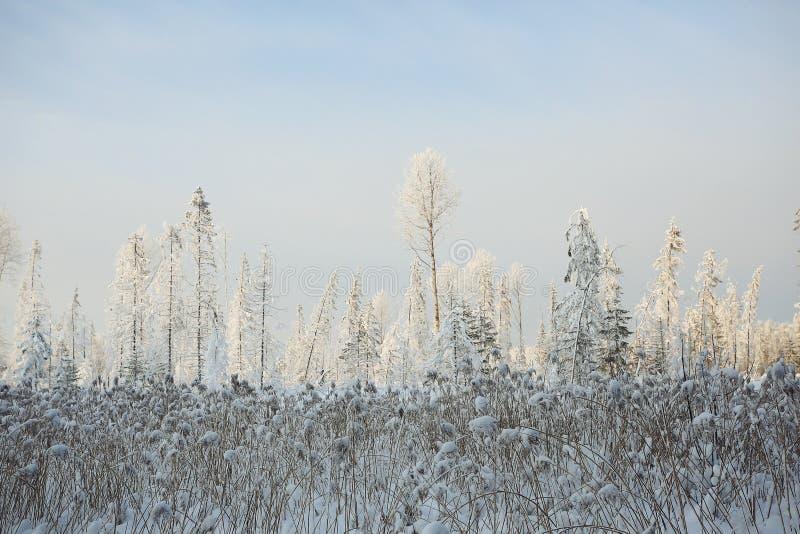 Horizontal monochrome de l'hiver photos libres de droits