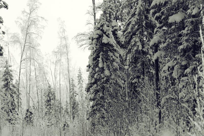 Horizontal monochrome de l'hiver photographie stock libre de droits