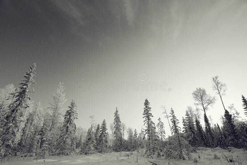 Horizontal monochrome de l'hiver image stock