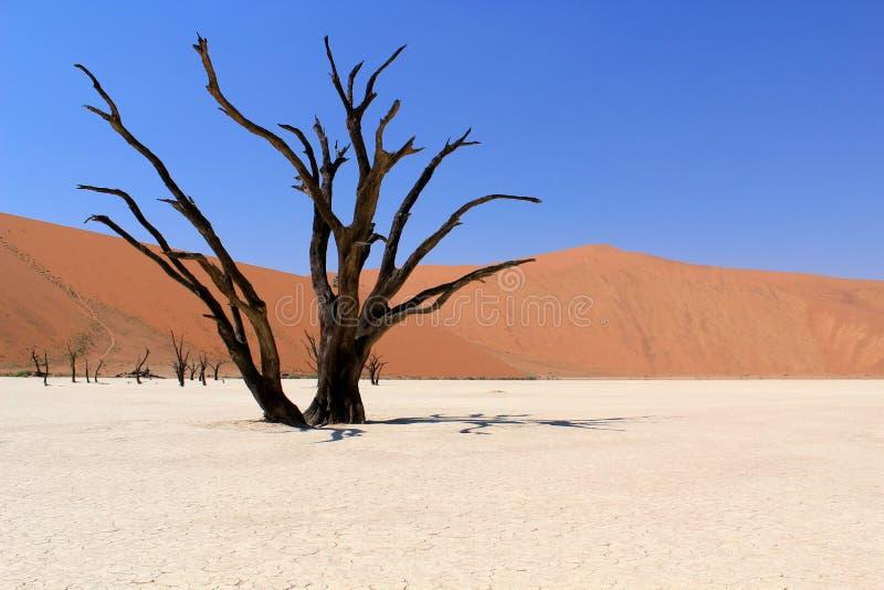 Horizontal mort de vallée de Sossusvlei. Désert de Nanib image stock