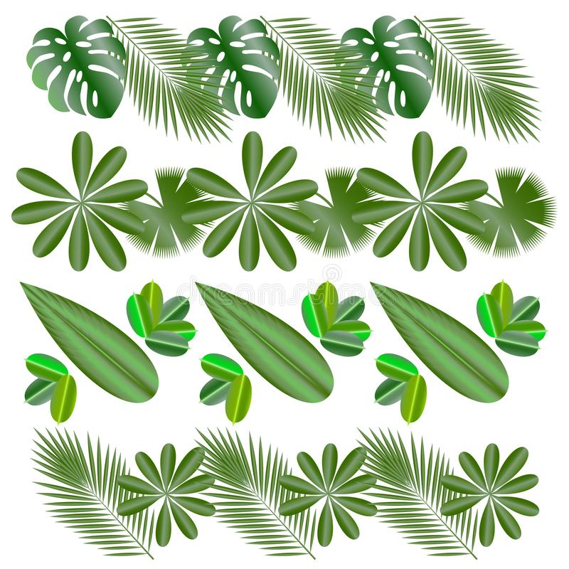 Horizontal patterns. Leaves of tropical plants. Isolated items. Monstera, ficus, palm tree Schefflera.  vector illustration