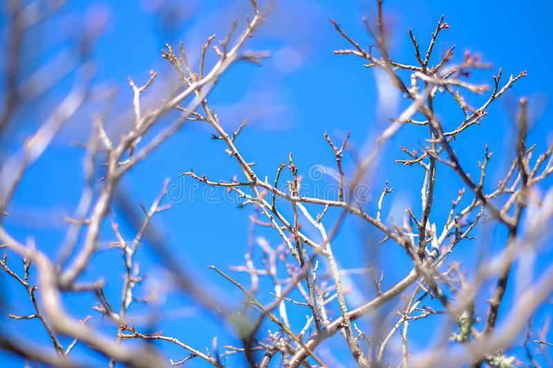 Horizontal photo depicting a macro spring view of the tree brunch on the blue sky background. de focused, blurred forest on the ba royalty free stock photo