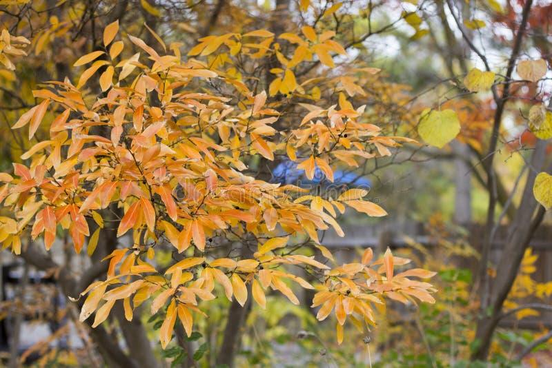 Horizontal photo of fall yellow & orange trees. Digital background photo stock photography