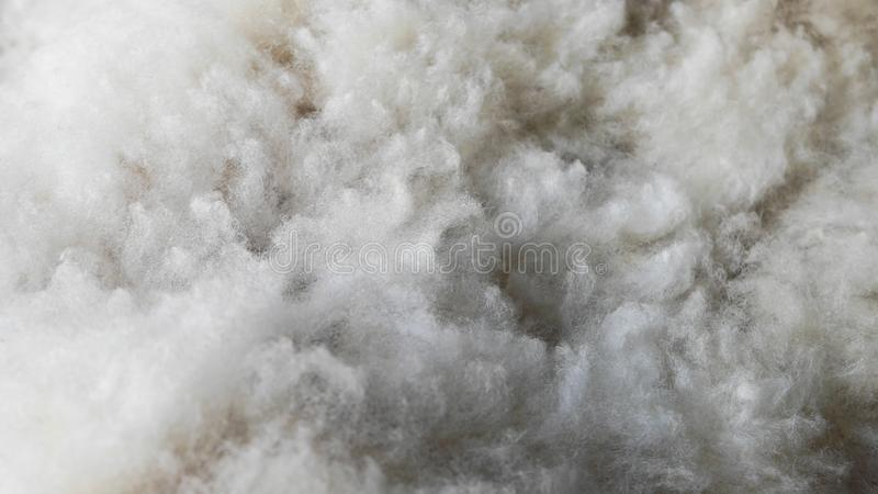 Fuzzy and white pure sheep wool. Beautiful texture that looks like clouds. Horizontal photo of fuzzy and white pure sheep wool. Beautiful texture that looks stock images